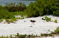 OysterCatchers072411_0089